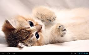 Small Wallpaper by Kittens Live Wallpaper Android Apps On Google Play