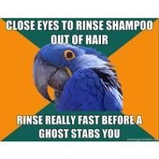 paranoid parrot meme parrot humor pinterest bird
