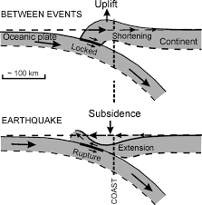 coseismic subsidence in the 1700 great cascadia earthquake