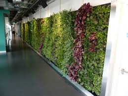verti grow blog on living walls
