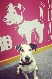 onclick bespoke office graphical and typographical wall mural office dog winthorpe wall mural
