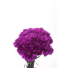 purple carnations purple carnations flower muse