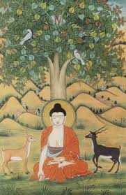 what buddhists believe about the bodhi tree