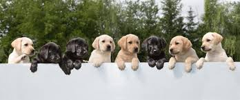 Dogs Helping Blind People Canadian Guide Dogs For The Blind Home Facebook