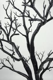 manzanita trees best 25 manzanita tree ideas on manzanita tree