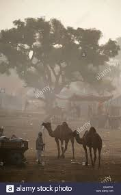 camel tents a hazy view of the pushkar mela grounds with camels tents and
