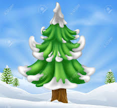blue spruce stock photos royalty free blue spruce images and pictures