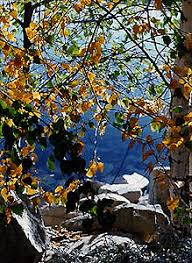 autumn colors california autumn fall california aspens