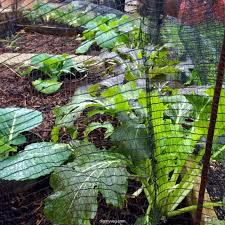 Vegetable Garden Netting Frame by 6 Easy Steps To Making Your Own Frames