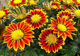 12 Best Annual Flowers For by Best Plants For Balcony Garden