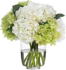 white hydrangea white hydrangea search floral hydrangea