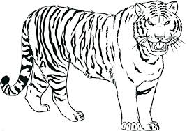 coloring page tigers royal bengal tiger coloring page free pages printable pictures