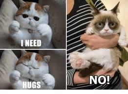 Cat Hug Meme - this is my monday face from grumpy cat memes hugs xspoon shortage