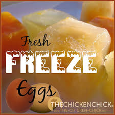 How To Have Chickens In Your Backyard by The Chicken Chick How To Freeze Fresh Eggs