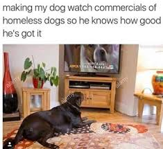 Aspca Meme - dopl3r com memes making my dog watch commercials of homeless