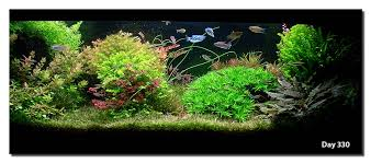Aquascape Design Layout Aquascape Of The Month April 2008