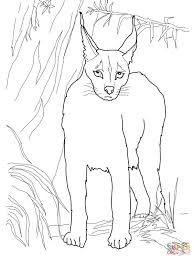 desert lynx caracal coloring page free printable coloring pages