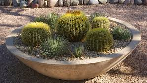Potted Plant Ideas For Patio by Desert Gardening Tough Container Plants For Patios