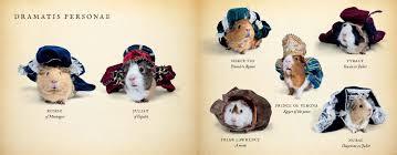 a guinea pig romeo u0026 juliet guinea pig classics william