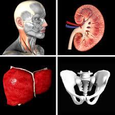Human Ear Anatomy Quiz Anatomy Quiz Pro Android Apps On Google Play