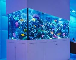 Reef Aquascape Designs Aquascape Design Android Apps On Google Play