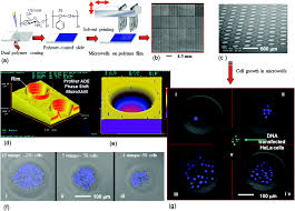 fabrication of polymeric biomaterials a strategy for tissue