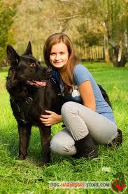 belgian malinois vest agitation protection leather dog harness for belgian malinois h1