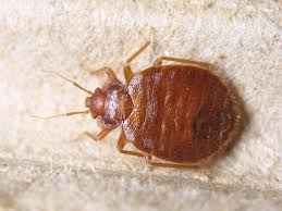 Living With Bed Bugs Pest Control Nj Pest Control Nyc Bed Bug Exterminator Nyc E
