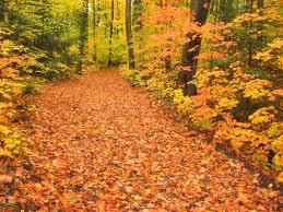 88 fall foliage images fall fall trees orange