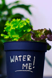 Hydroponics Vegetable Gardening by 93 Best Hydroponics Images On Pinterest Hydroponics Grow Lights