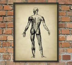 Picture Of Anatomical Position Muscle Man Vintage Anatomy Wall Art Poster 2 Anatomical