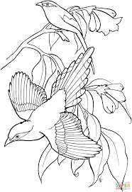 green coloring page green magpies coloring page free printable coloring pages