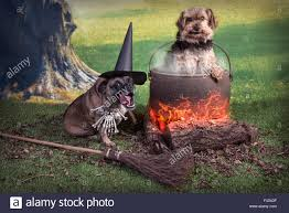 comical halloween image of two dogs one as a witch and one in the