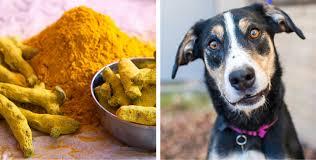 chien cuisiné 8 épices et herbes aromatiques excellentes pour la santé de votre chien