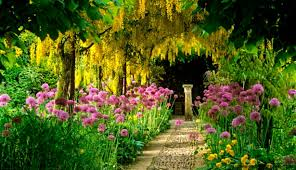 wanderlust wednesday dubai miracle garden photos flickr