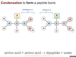 3 2 carbohydrates lipids and proteins i biology