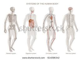 anatomy stock images royalty free images u0026 vectors shutterstock