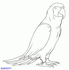 simple parrot drawing how to draw parrots draw macaws step step