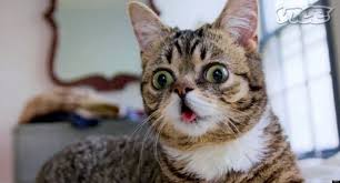 Lil Bub Meme - lil bub friendz trailer from meme to the movies video huffpost
