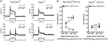 a distinct contribution of short wavelength sensitive cones to