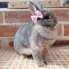 bows for baby pink bows for bunnies pet rabbit bows pet rabbit