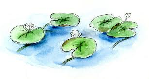 how to draw and paint lovely lily pads