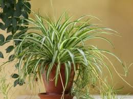 common house plants with pictures
