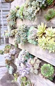 vertical succulent garden vertical succulent gardens succulents