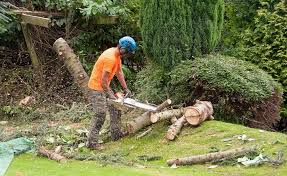 best 25 tree removal service ideas on http 404 c