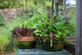 help and advice on planning a vegetable garden rhs gardening