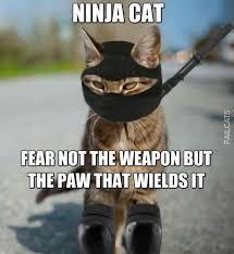 Ninja Meme - ninja cat failcats funny cat fails