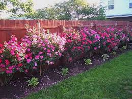 Backyard Planter Ideas Backyard Rose Garden Design Home Design Ideas