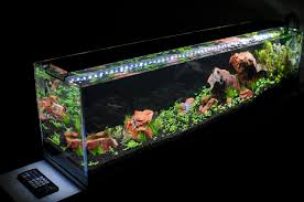 Best Substrate For Aquascaping Planted Tank Exclusive Free Current Usa Ramp Timers Page 2