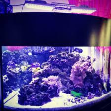 Bill Gates Aquarium In House by Continuum Aquatics Bacter Clean M Marine Depot
